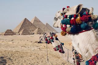 O cămilă în zona piramidelor din Egipt - foto de  Fynn schmidt - unsplash.com